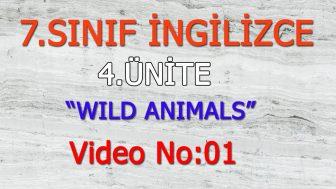 7. SINIF İNGİLİZCE 4. ÜNİTE WILD ANIMALS VIDEO NO:01