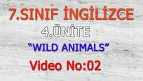 7. SINIF İNGİLİZCE 4. ÜNİTE WILD ANIMALS VIDEO NO:02