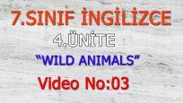 7. SINIF İNGİLİZCE 4. ÜNİTE WILD ANIMALS VIDEO NO:03