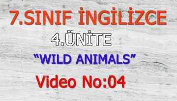 7. SINIF İNGİLİZCE 4. ÜNİTE WILD ANIMALS VIDEO NO:04